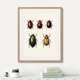 Марк Кейтсби - Assorted Beetles №7, 1735г.