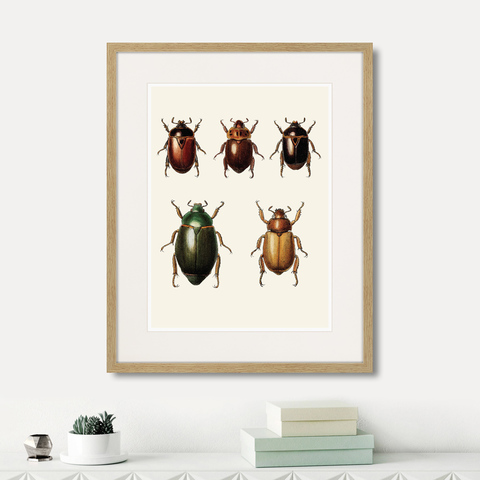 Марк Кейтсби - Assorted Beetles №7, 1735г.