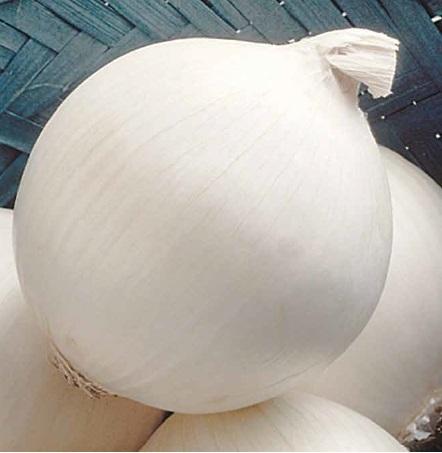 Репчатый Сьерра Бланка F1 семена лука репчатого (Seminis / Семинис) сьерра_бланка.jpg