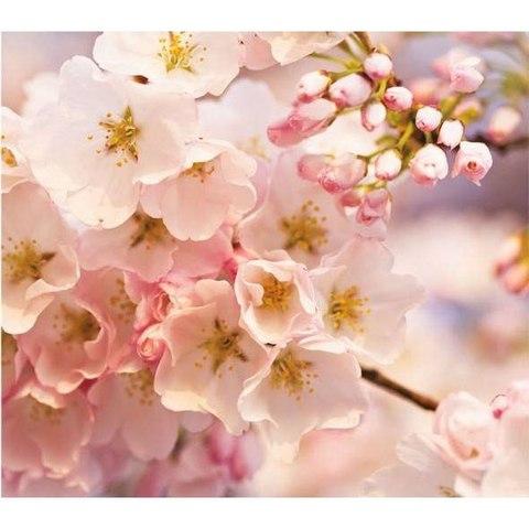 Розовая симфония - сакура 294x260 см