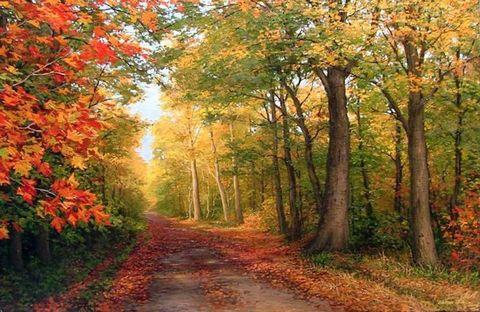Картина раскраска по номерам 40x50 Парк осенью