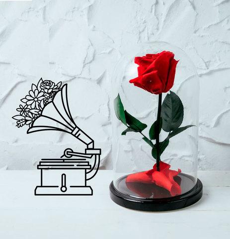 Роза в колбе (стабилизированная)