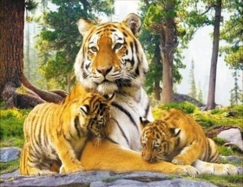 Алмазная Мозаика 40x50 Тигр с детёнышами (арт. HWA3224 )