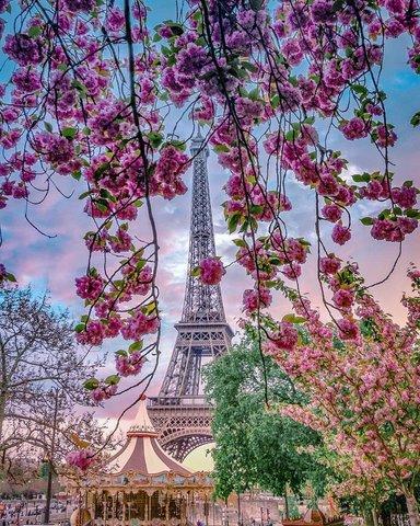 Картина раскраска по номерам 40x50 Вид на эйфелеву башню через цветущее дерево