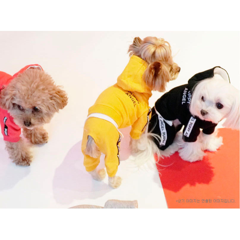 костюмы для маленьких собак