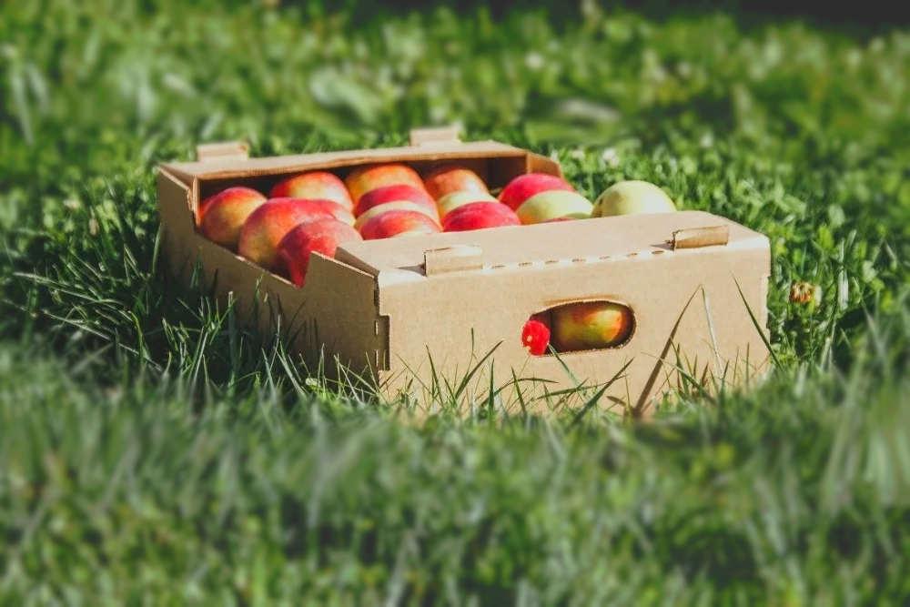 Коробки для овощей купить в Казахстане недорого