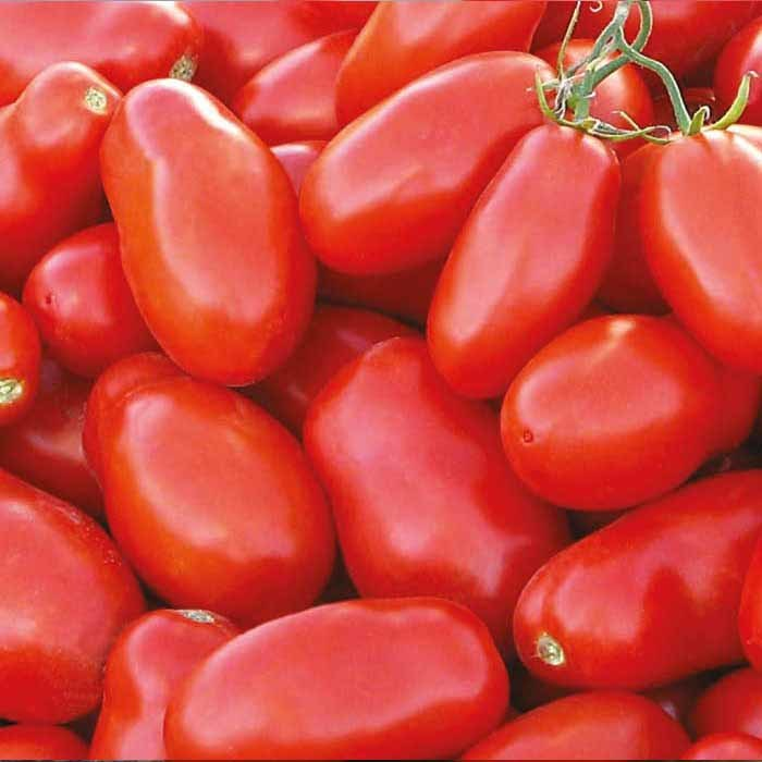 Nunhems Тейлор F1 семена томата детерминантного (Nunhems / Нюнемс) тейлор_.jpg