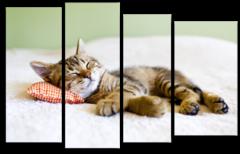 """Модульная картина """"Кошка спит на подушке"""""""