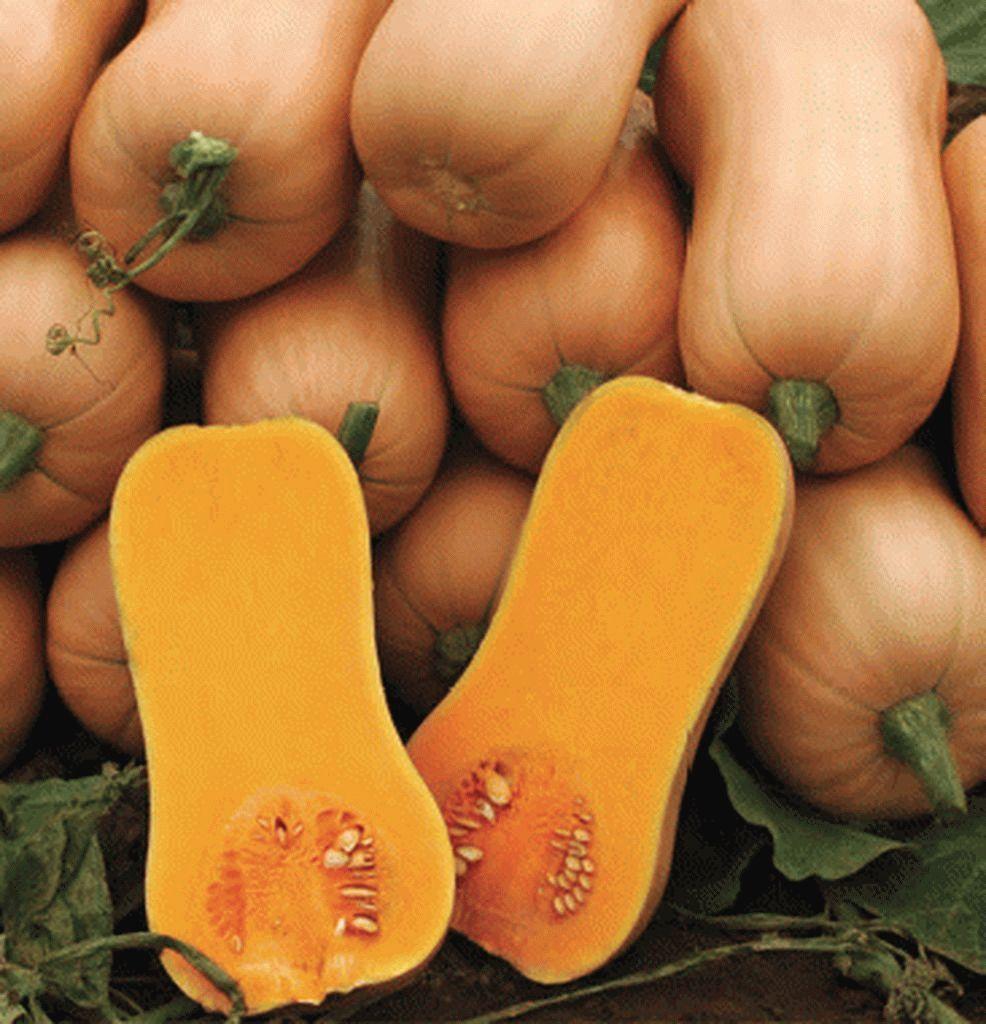 Тыква Ариэль F1 семена тыквы (Sakata / Саката) Ариэль_F1_семена_овощей_оптом_семена_овощей_оптом_семена_овощей_оптом.jpg