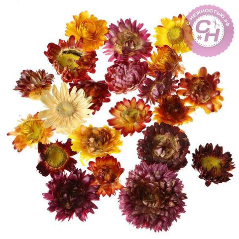 Сухоцветы МИНИ для эпоксидной смолы - Цветы Бессмертника, 2-5 см, набор 15 г.