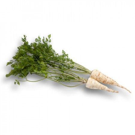 Петрушка Бубка семена петрушки (Rijk Zwaan / Райк Цваан) БУБКА_семена_овощей_оптом.jpg