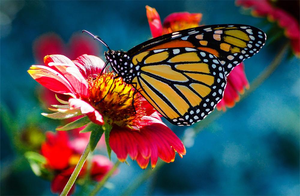 Папертоль Бабочка на гербере — главное фото сюжета.