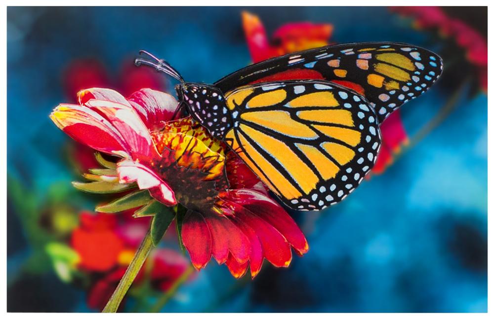 Папертоль Бабочка на гербере — готовая работа, вид спереди.