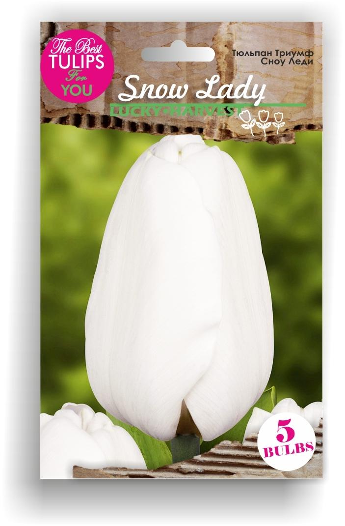 Луковицы Тюльпана Триумф Snow Lady (Сноу Леди) ТМ LUCKY HARVEST (количество в упаковке 3 луковицы)
