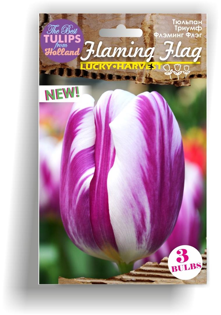 Луковицы Тюльпана Триумф  Flaming Flag (Флэминг Флэг) TM Jan de Wit en Zonen B.V. ( количество в упаковке 3 луковицы)