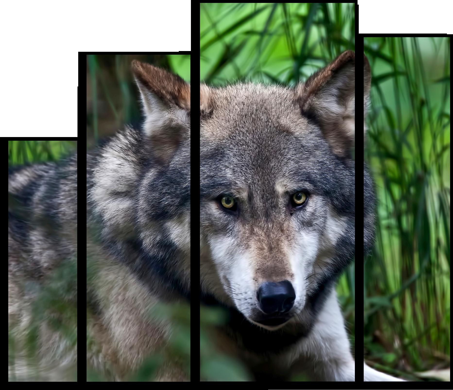 """Животные Модульная картина """"Спокойный волк"""" М540.png"""