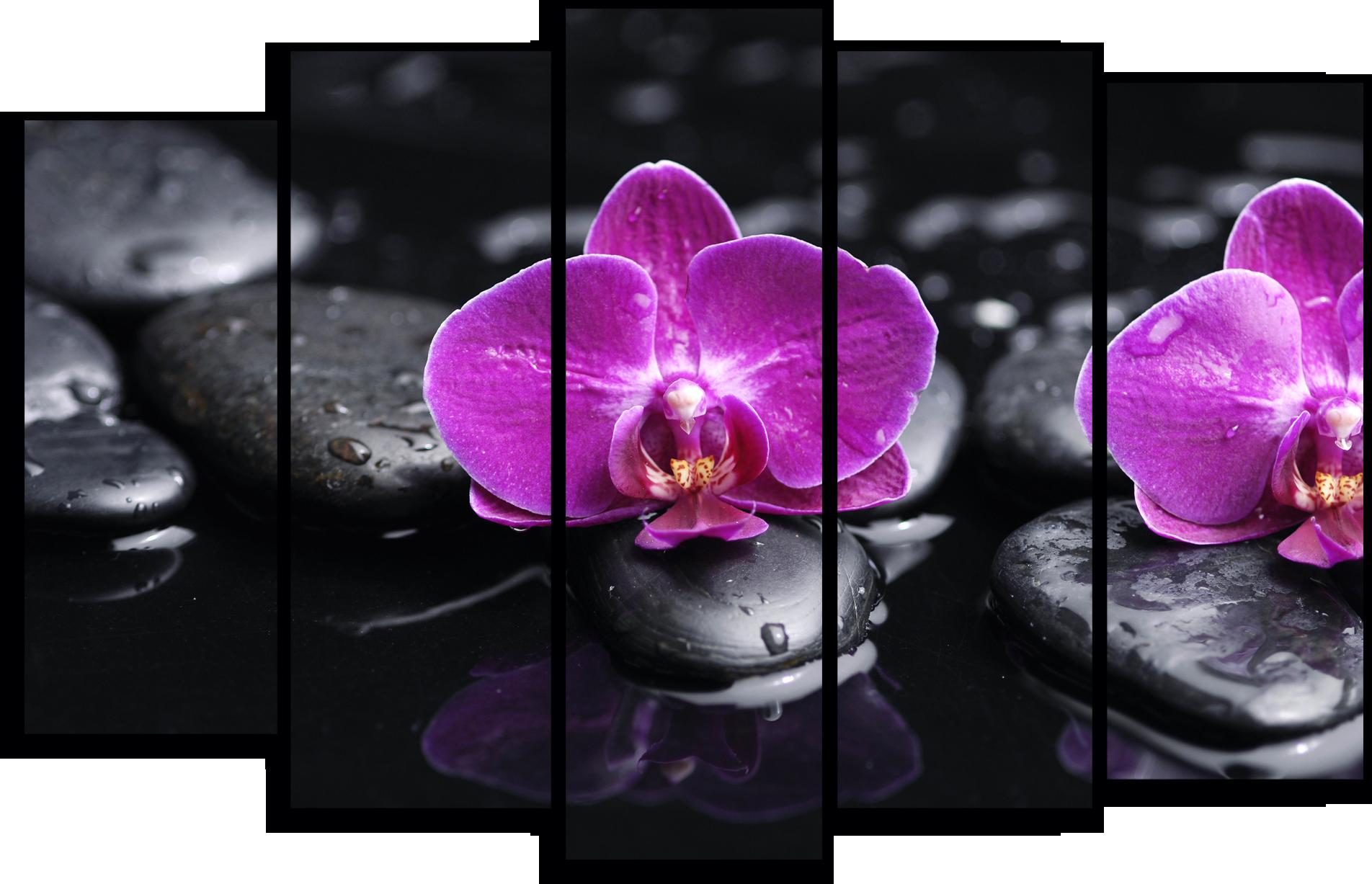 "Цветы Модульная картина ""Орхидея на камнях"" М764.png"