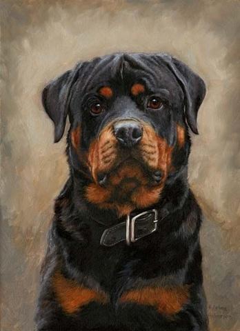 Картина раскраска по номерам 40x50 Портрет собаки