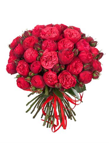 25 пионовидных роз Ред Пиано #14323