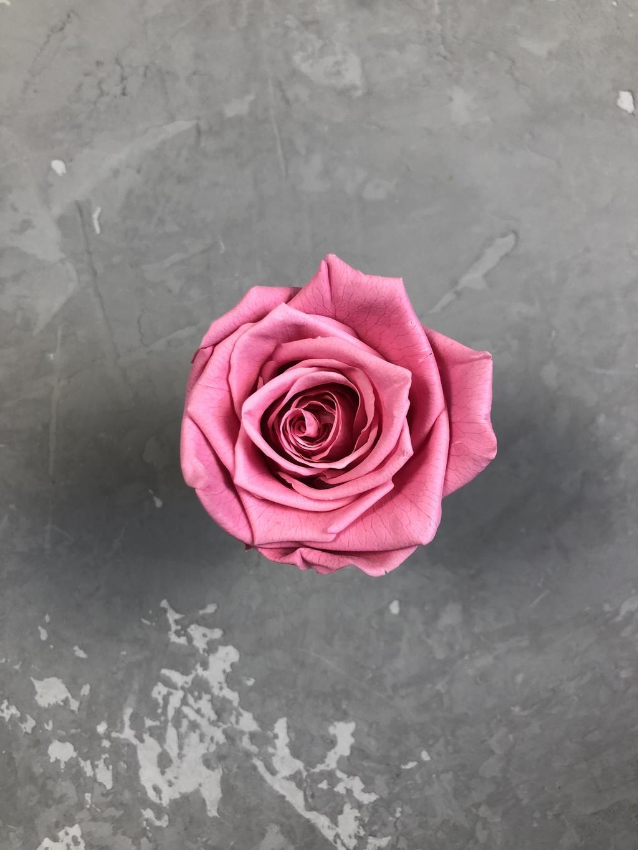 Роза классическая малиново-розовая d=5,5 см