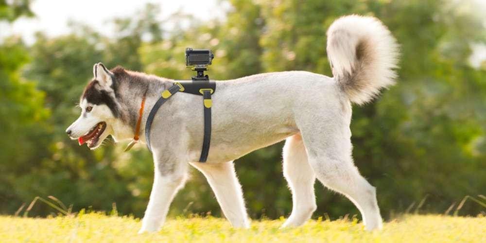 Крепление на собаку Sony (AKA-DM1)