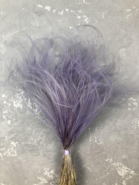Стифа (ковыль) нежно-фиолетовая