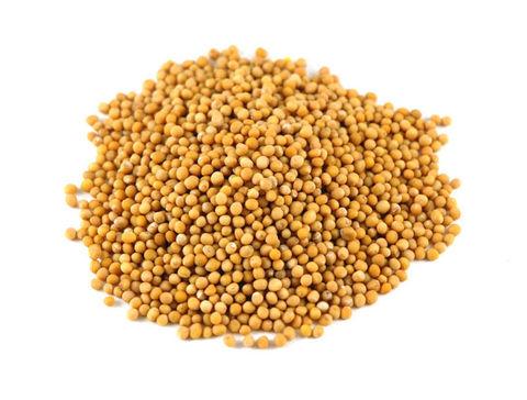 Горчицы жёлтой семена