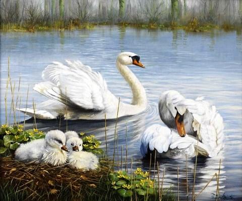 Картина раскраска по номерам 40x50 Лебеди с лебедятами
