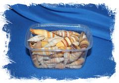 Спиральные ракушки для декора Митра