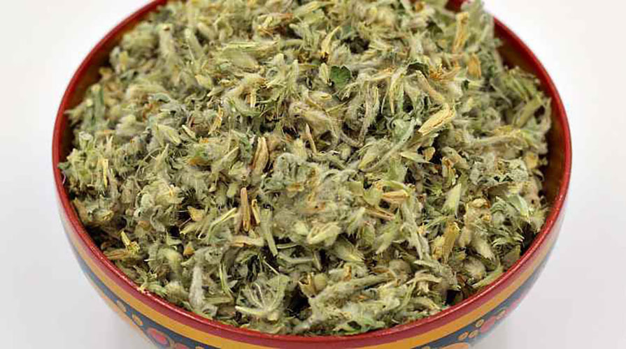 Травы Панцерия шерстистая panzerina-472.jpg