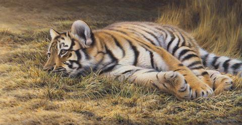 Картина раскраска по номерам 40x50 Тигренок отдыхает