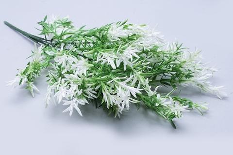 Аспарагус, зелень флористическая