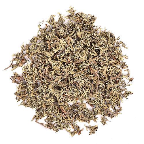 Травы Пармелия parmelia-478.jpg
