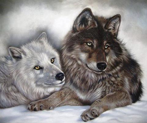 Картина раскраска по номерам 30x40 Темный волк со светлой волчицей