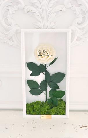 Стабилизированная Роза в Картине Premium Оптом Размер*Бутон (44х22х8см*11см) Цвет белый