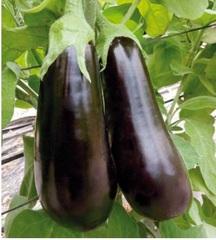 Навал F1 семена баклажана (Sakata / Саката)