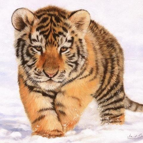 Картина раскраска по номерам 40x50 Тигренок зимой