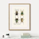 Марк Кейтсби - Assorted Beetles №8, 1735г.