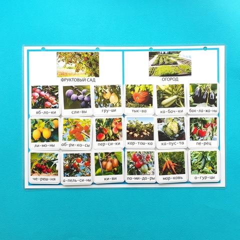 Фруктовый сад и огород. Окружающий мир (адаптивный материал). Развивающее пособие на липучках Frenchoponcho (Френчопончо)