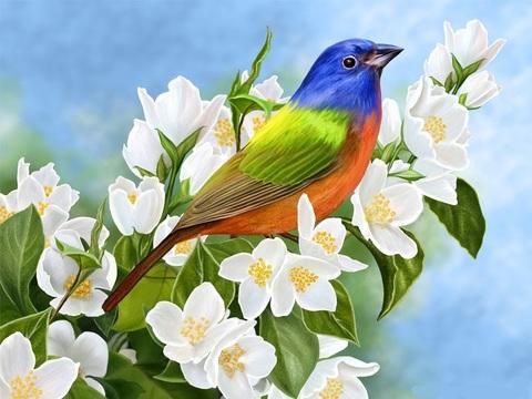 Алмазная Мозаика 30x40 Разноцветная птица на ветке с белыми цветами
