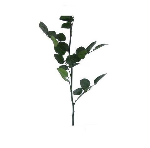 Стабилизированный Стебель с листвой 50см Эквадор