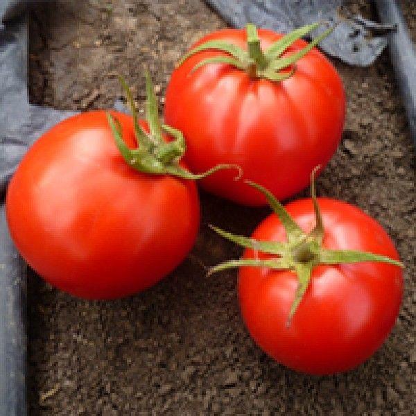 Томат Супер Ред F1 семена томата детерминантного (Seminis / Семинис) Супер_Ред_семена_овощей_оптом.jpg