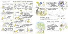 Весна мишки Бруно | Гунилла Ингвес