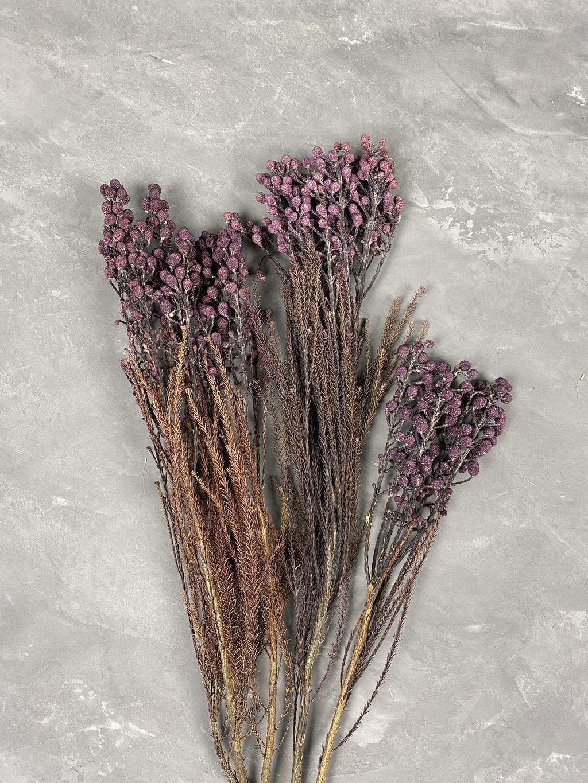 Бруния стабилизированная фиолетовая