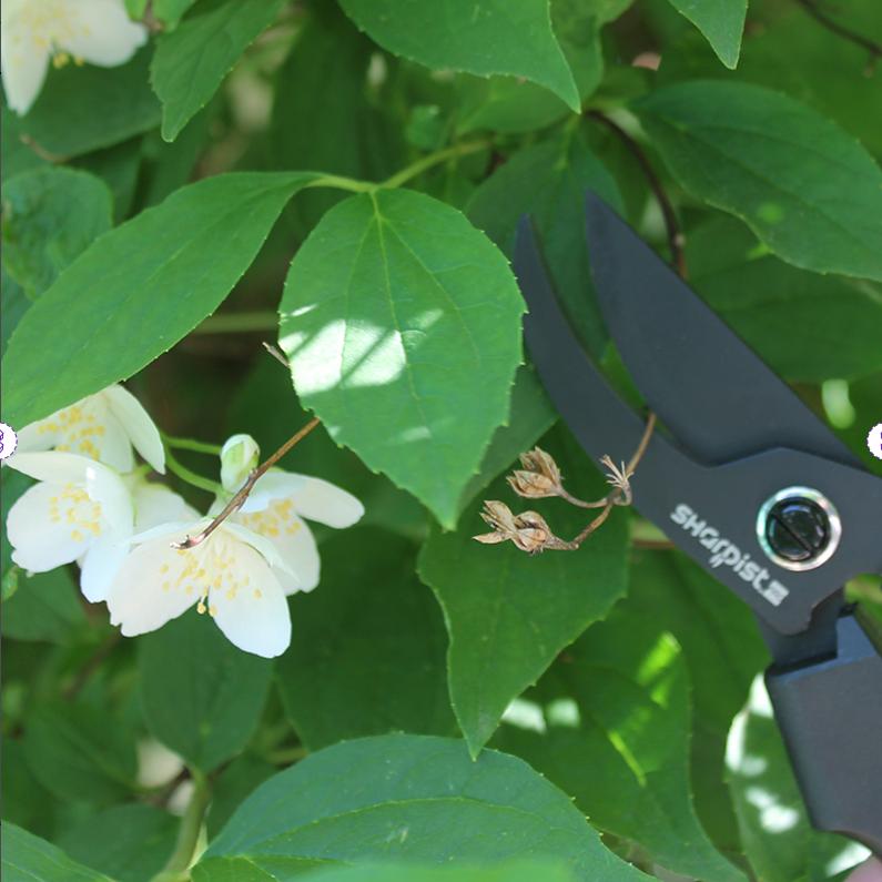 Ножницы-секатор, 19,5 см Sharpist