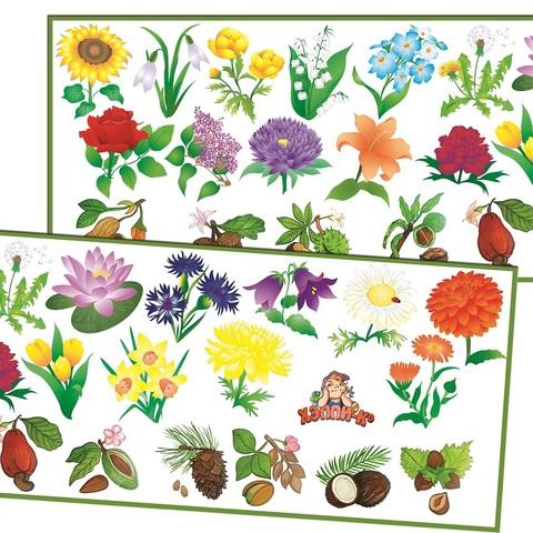 Развивающий набор наклеек:  Цветы и орехи
