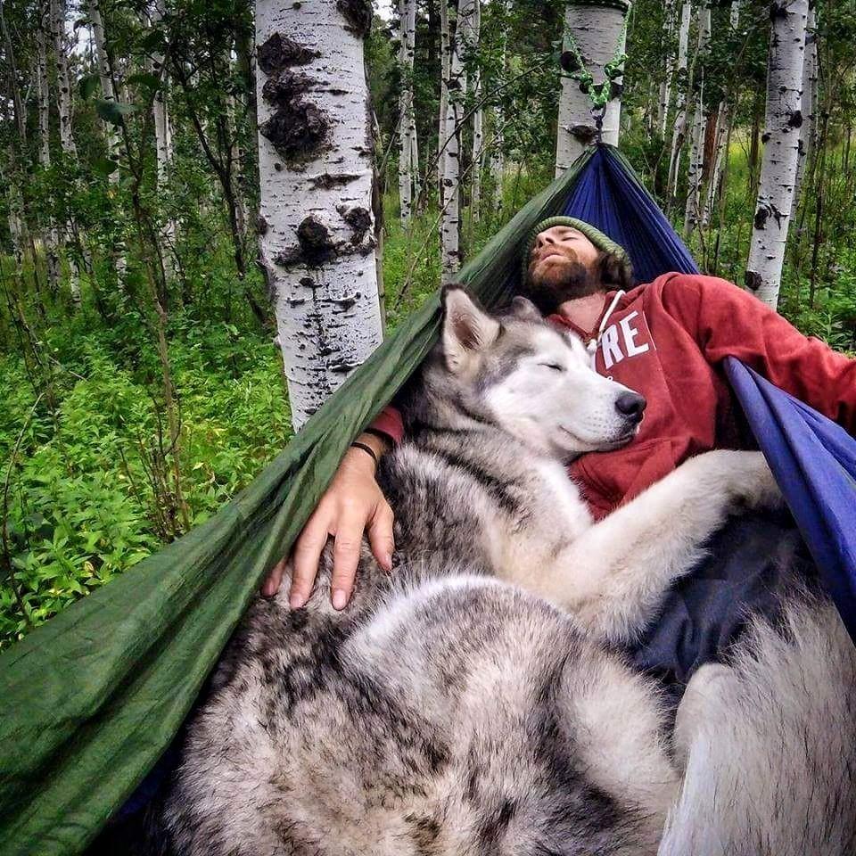Сплю с собакой в гамаке.