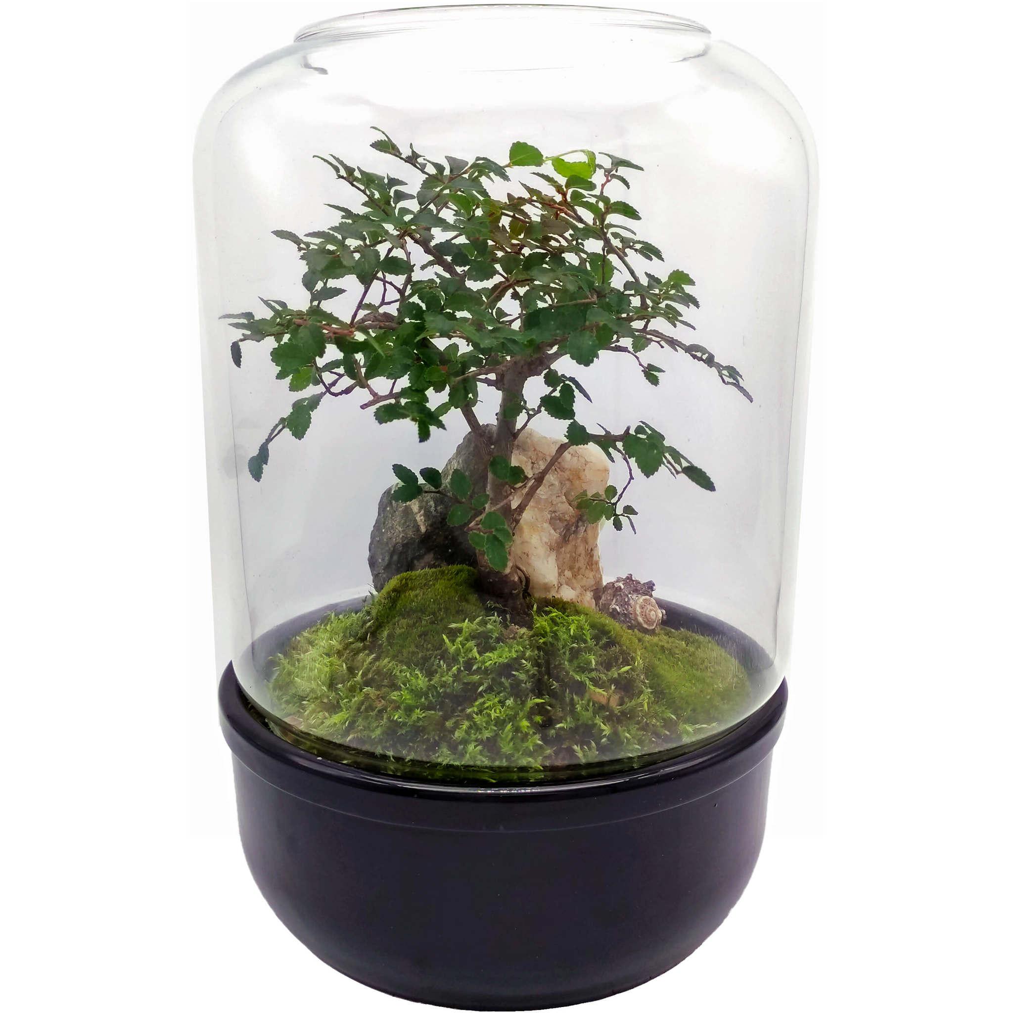 Флорариум стеклянный Шантал D16 H25 пример с растением
