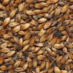 Солод ячменный Курский cолод Двойной обжарки 250-350, 1 кг