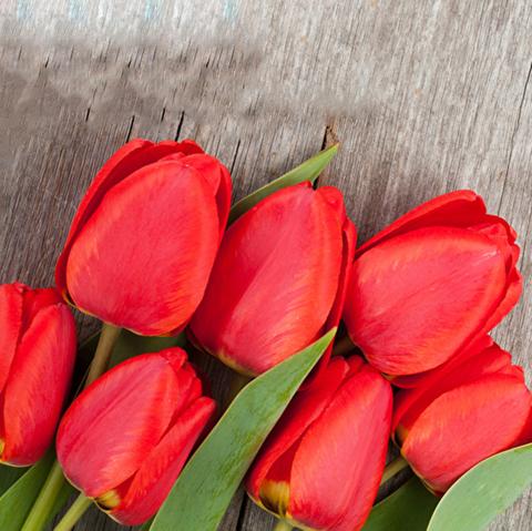 Тюльпаны красные от 9шт